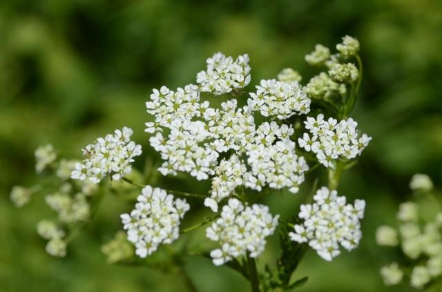 ...wild flowers...